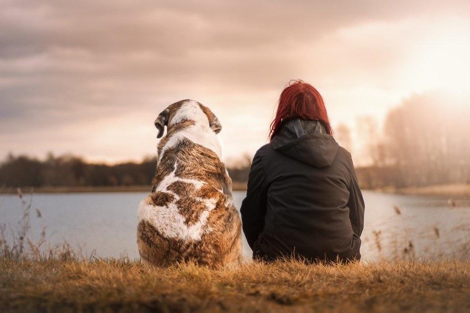 Perchè un cane fa bene alla salute